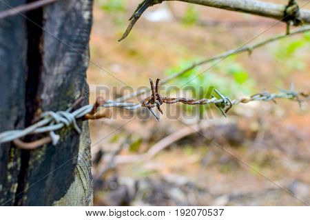 Rusty barbed wire on a wooden pole. Low depth of field.