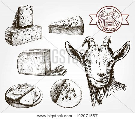 Head of a goat. Goat cheese. Set of sketches on a gray background