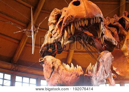 Osaka, Japan - Apr 11 2017: T-Rex (Tyrannosaurus Rex) Skeleton at the Universal Studios JAPAN