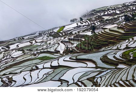 Panorama of terraced rice fields in Yuanyang county, Yunnan, China. Yuanyang county lies at an altitude ranging from 140 along the Red River up to nearly 3000 metres above sea level in the Ailao mountains.