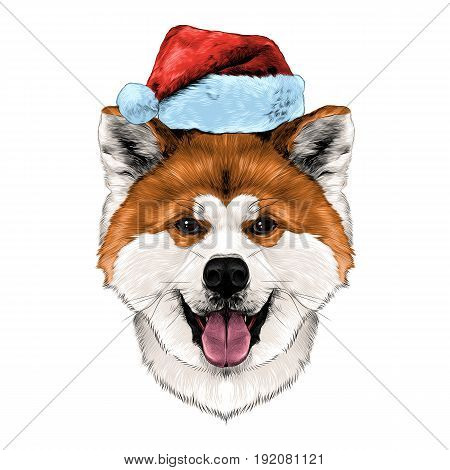 muzzle dog breed Akita inu with his tongue hanging out in Santa hat full face looking forward symmetrically sketch vector graphics color picture