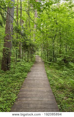 Ecological path made out of wooden planks to walk away curving into the forest.