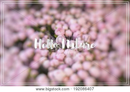 Hallo Nature. Lots of pretty and romantic violet and pink peonies in floral shop.