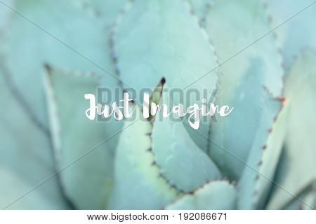 Just Imagine. Sharp Pointed Agave Plant Leaves.