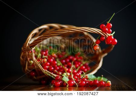 Ripe red currant in a basket on a black background