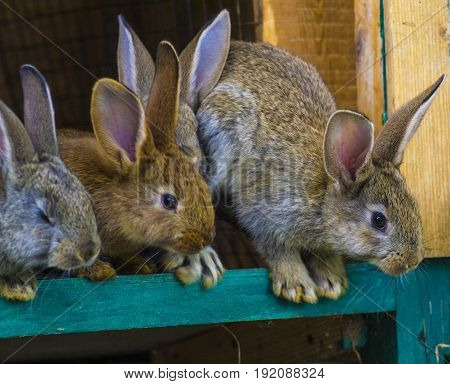 little rabbits. rabbit in farm cage or hutch. Breeding rabbits concept