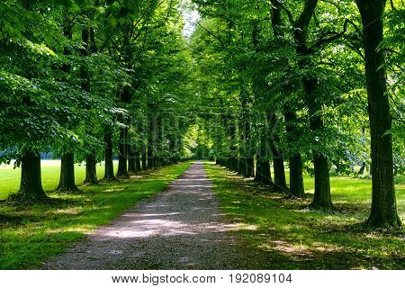 The park of Monza (Brianza Lombardy Italy) in the springtime (May)