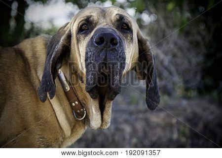 Dog Hound In The Wild