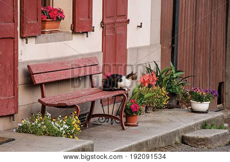 Cat on top of a bench, in Saint-Gervais-Les-Bains/Le Fayet in France