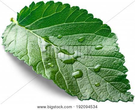 Green drops leaf water white background tranquil scene tropical climate