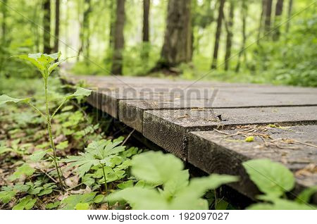 Ecological trail made of wooden planks for walking in the woods. Summer day close-up.