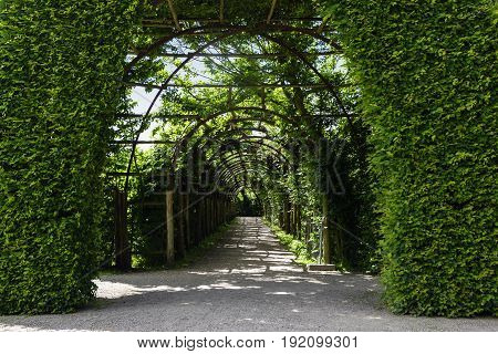 Gate of book hedges and an overgrown arch pergola as a footpath tunnel of plants park and garden design