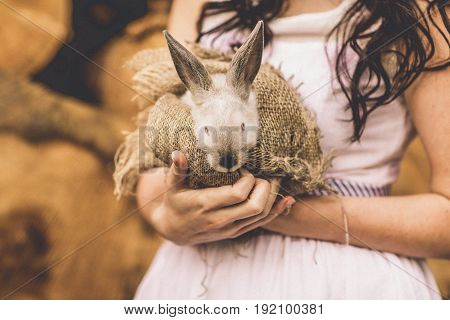 Beautiful baby rabbit bunny in brides woman hands.
