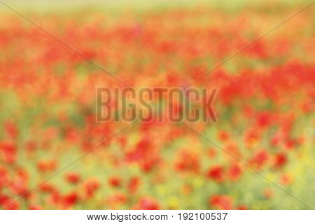 beautiful out of focus background with wild poppies backdrop for your design