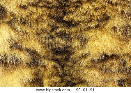 colorful texture of snow leopard fur ( Uncia ) endangered species