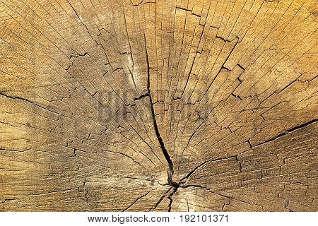 cracks on spruce wood detailed texture of annual ring on old wooden beam
