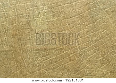 detail of african elephant pelt natural real texture