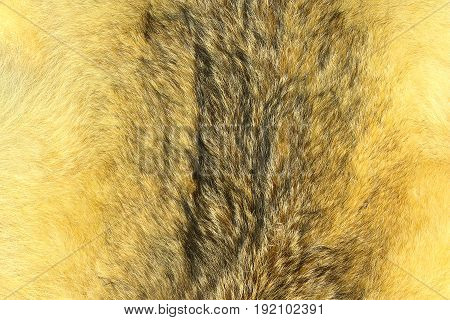 eurasian lynx fur animal pelt texture for your design