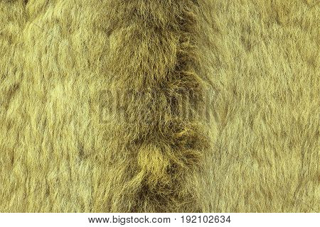 european lynx textured fur real pelt from hunted animal
