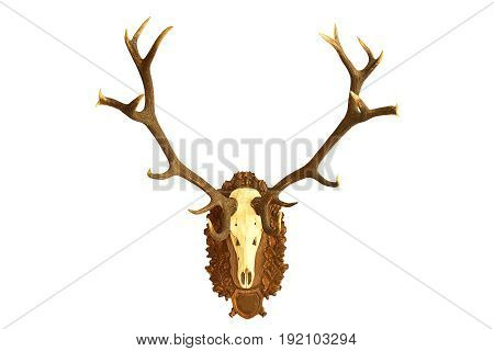 large hunting trophy of red deer stag isolated over white background wall mount on wooden plate ( Cervus elaphus )