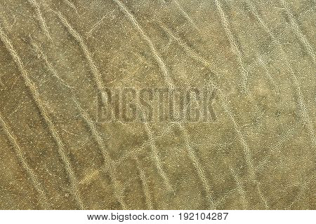 textured african elephant skin real animal pelt for your design