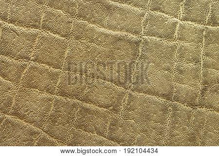 textured detail of african elephant pelt ( Loxodonta adaurora )