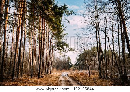 Countryside Road Path Walkway Through Autumn Forest. Nobody. Early Spring Or Late Autumn Mixed Forest Landscape. Nature Of Belarus Or European Part Of Russia
