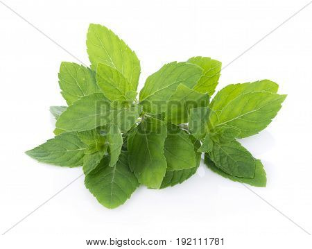 Closeup Peppermint isolated on white background.