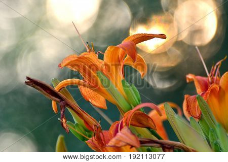 A bright orange day lily stands out against a dappled background.