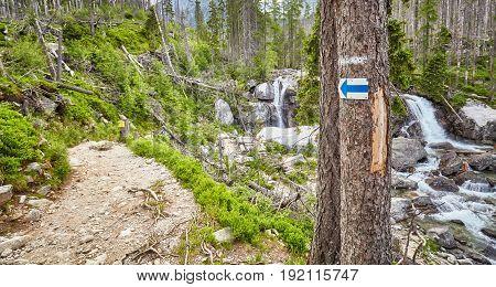 Hiking Trail Arrow Mark On Tree.