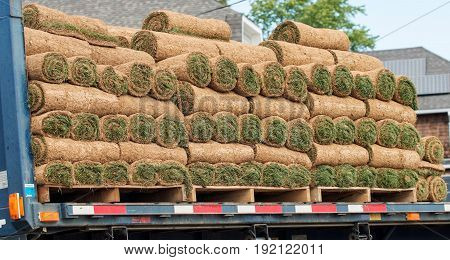 New sod being delivered to a home owner to replace their lawn in the springtime