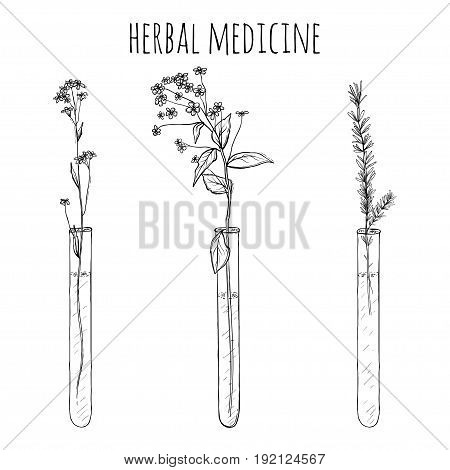 hand drawn lavender plants, Flowers in vitro or vial, sketch vector illustration