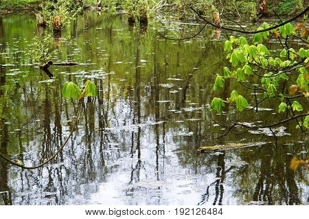 marshland in Russian forests fallen trees peat