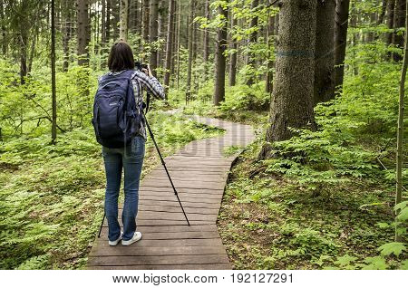 Photographer woman with a camera and a tripod standing on the ecological path and takes pictures of the spring forest.