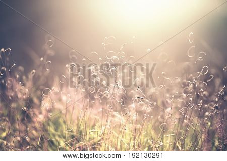 Nature outdoor image with shallow depth of field and blur for use as background