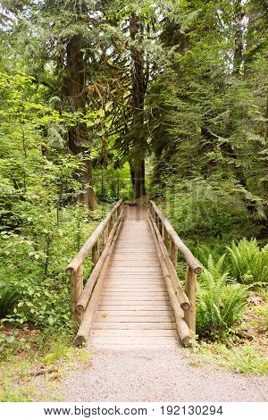 Wood bridge provides a path over the stream in the forest