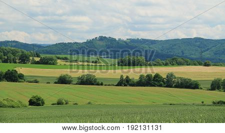 rural landscape with fields and groups of trees in summer