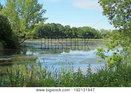 pond with green trees and reed on its banks in summer, Poodri, Czech Republic