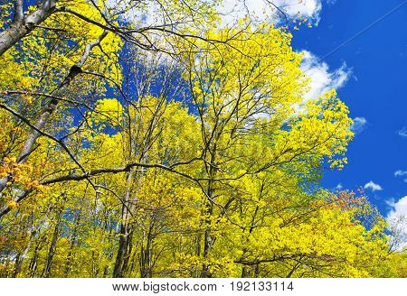 Early spring trees in hop brook state park in Naugatuck Connecticut on a sunny blue sky day.