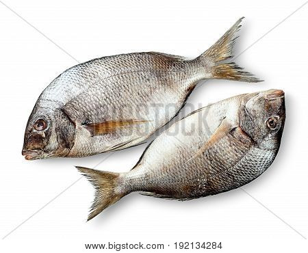 Two raw fresh dorados isolated on white background with shadow