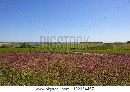 Red Campion And Scenery