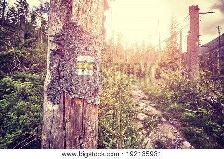 Vintage Toned Hiking Trail Marking Painted On Tree.