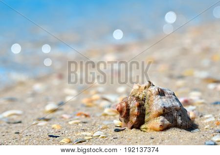 Sea Waves Wash The Seashells On The Beach