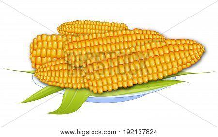 Cooked corn. Boiled corn. Corn on a white plate. Still corn.