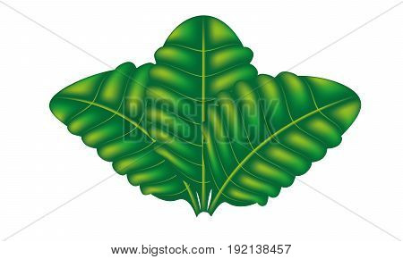green, leaf, vector, illustration, three, three, objects, painting