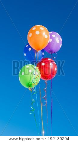 decoration colored Balloons on a blue background