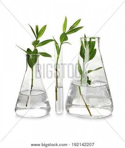Plants in glassware isolated on white