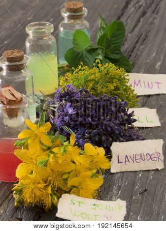 dill, mint, lavender and St John's wort, herbs on the table