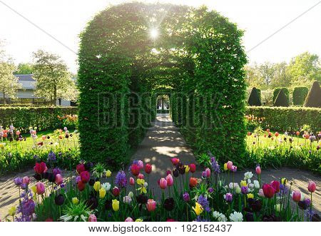 Beautiful floral archway in park on sunny day