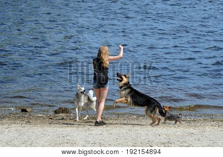 An unidentified girl plays with dogs.Modern residential area Obolon.June 21 ,2017 in Kiev, Ukraine